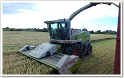 Cultivations and Drilling
